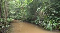 Wer Orang Utans sehen will hat in Malaysia, oder besser auf Borneo die besten Bedingungen dafür. Um unserem Ziel näher zu kommen leihen wir uns am Flughafen einen kleinen Wagen, […]